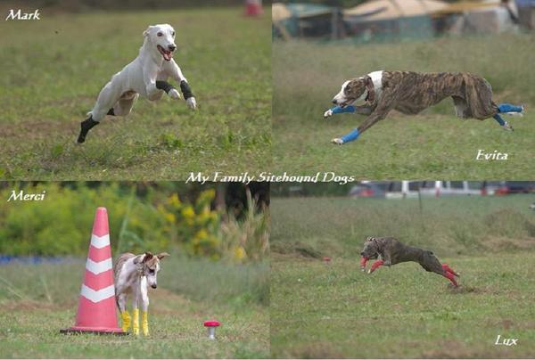 20101017sitehounds_2